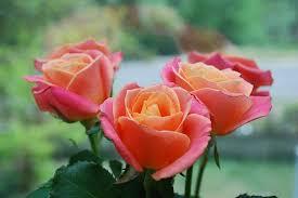 rozen bezorgen